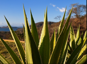 Marvel at the Amazing Playa Hermosa Plant Life